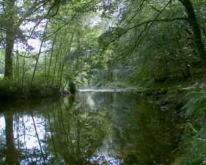 La rivière Ellé, près du Faouët